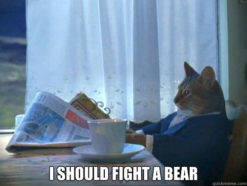 cat-bear